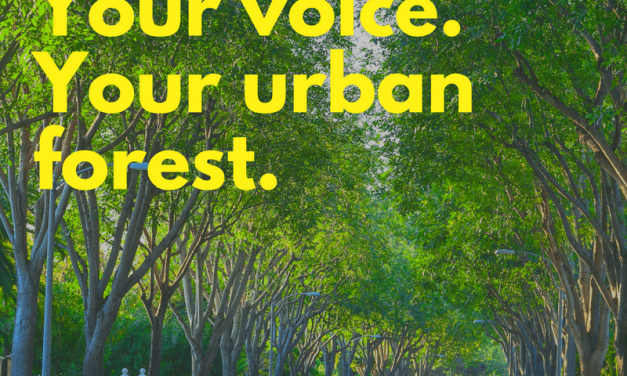 Share Your Opinion on the City's Trees & Help Shape LA's Urban Forest Management Plan
